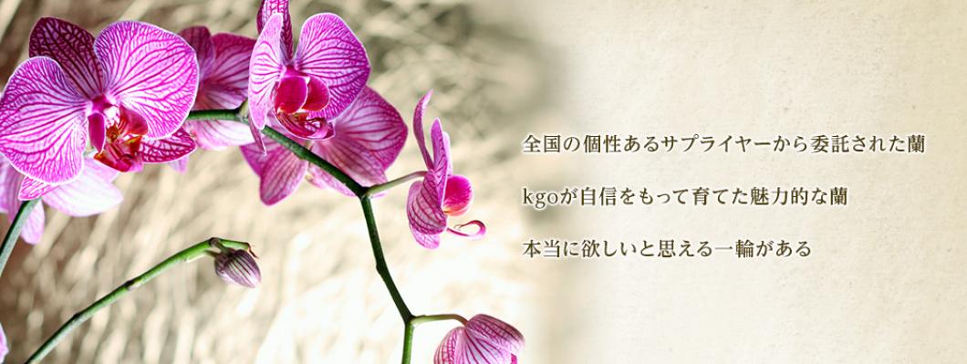 kgo Orchids Service Blog